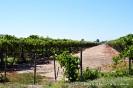 Weinanbau in Mendoza