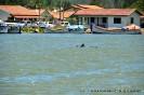 Delphine treiben die Fische ins Netz